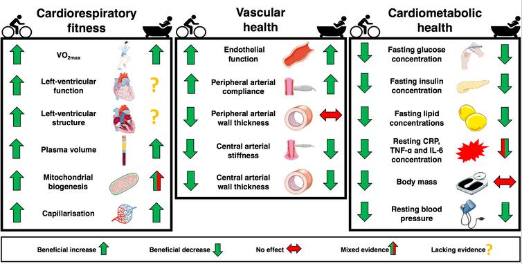 Diagramme montrant les fonctions de santé qui s'améliorent avec le bain/l'exercice.