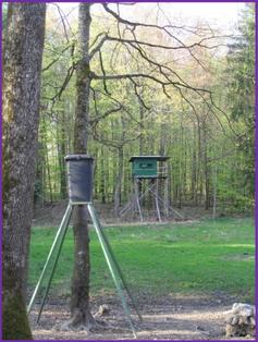 Photo de dispositifs d'agrainage dans un bois.